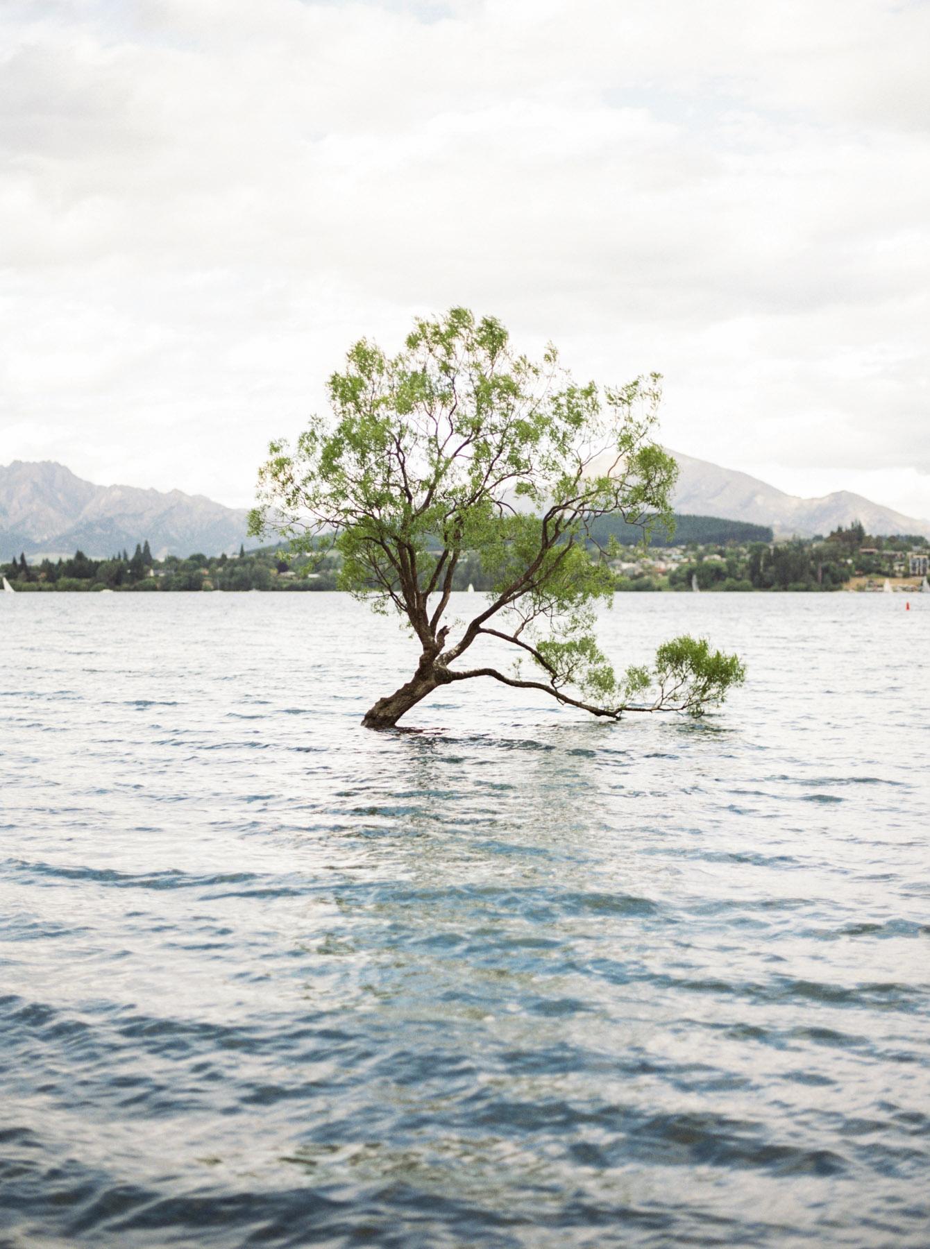Wanaka-tree-瓦納卡-樹